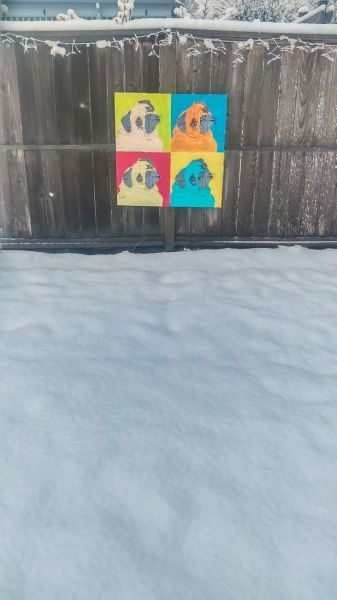 Ossie Bladine##Pug pop art hanging on the fence along the snow-covered West McMinnville Linear Park.