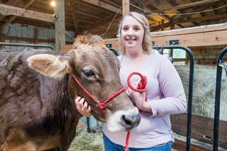 Marcus Larson/News-Register##Chelsey McFalls and her favorite cow, Lola, have been in the show ring at many county and state fairs. McFalls is a member of the Homesteaders 4-H Club in Yamhill.