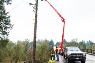 Marcus Larson/News-Register ## The top of a giant Douglas fir snaps off as workers from R&R Tree Service begin removing the tree in preparation for work on the Three Mile Lane Bridge. A temporary bridge will be built next to the existing one, which will be removed and replaced.