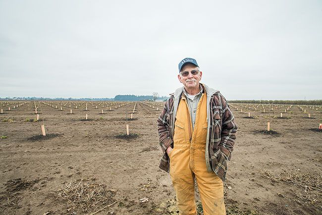 Marcus Larson/News-Register##Farmer Dave Cruickshank in front of his recently planted hazelnut field.