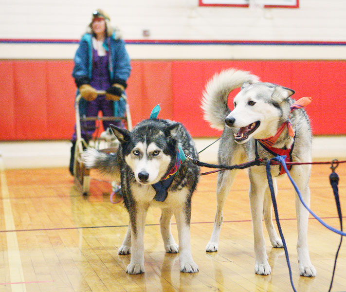 Rockne Roll/News-Register##From right, Willow and Cabo, belonging to Lorraine Temple, demonstrate the rigging of an Alaskan dog sled while Amity Middle School s Mindy Wallace stands ont he sled modeling a musher s protective clothing during Temple s presentation to Amity Middle School students Tuesday, Feb. 16.