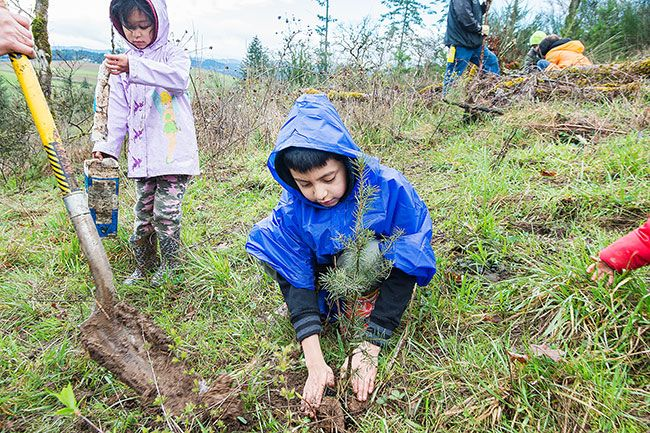 Marcus Larson/News-Register##Cub Scout Misael Mendoza fills in dirt around a newly planted tree. Tree planting is a muddy job, said Misael, 9, but it s fun, too.