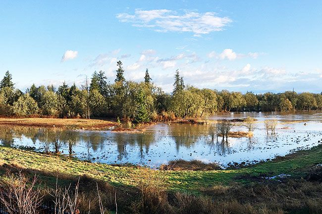 Photo by Sandi Colvin ## Looking out over Baker Creek wetland where developer is proposing fill to create 12-15 additional homesites.