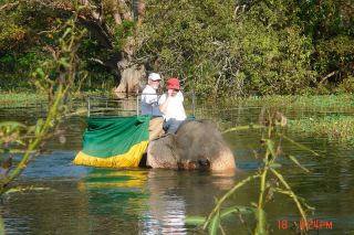 Submitted photo##John Francis and Caye Poe riding an elephant in India during one of their many world travels.