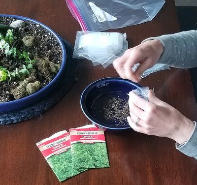 Photo by Mandy Hatfield##Seeds being separated for Food Hero s Grow This! Oregon Garden Challenge.