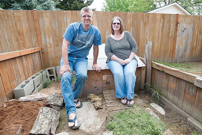 Marcus Larson/News-RegisterCustom-made enclosures in Tony and Josette Thelians' McMinnville backyard are home to seven turtle and tortoise species. The couple operate Slow Movers Resort Turtle and Tortoise Rescue.