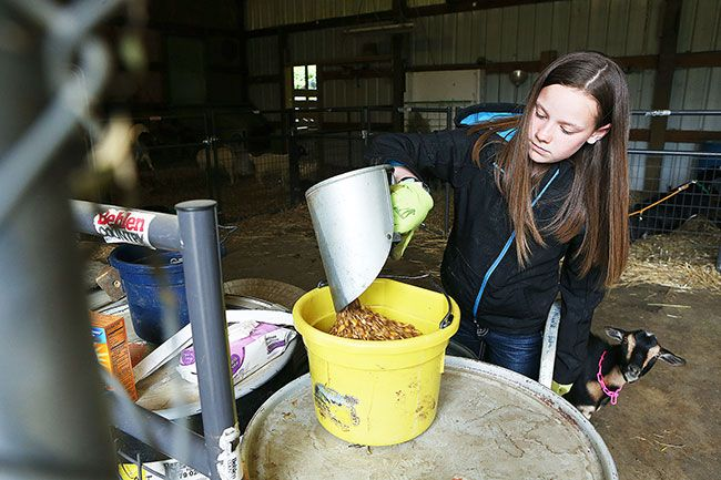 Rockne Roll/News-Register##Kaylee pours out animal feed at her family's home north of Yamhill. She shows goats through 4-H and helps with other tasks on the farm.