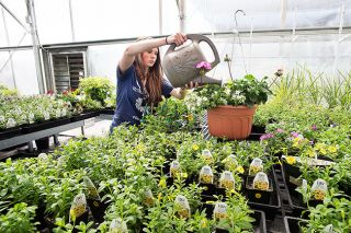 Marcus Larson / News-Register file photo##McMinnville High School student Nicole Larson waters plants during the annual spring plant sale in 2016.