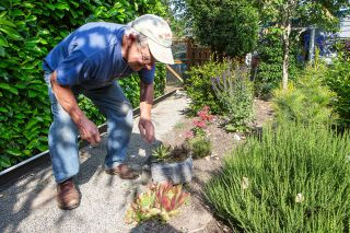 Rockne Roll/News-Register##David Lowe patrols for weeds around a group of succulents. A gravel path travels alongside the property line in the backyard.