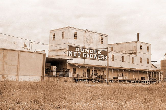##Tree nuts, primarily walnuts and filberts, are an important crop in Yamhill County. The Dundee Nut Growers plant is one of the facilities that handles a major share of the nut crop in the area.