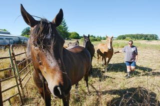 Rockne Roll/News-Register##Joy Laudahl of Harmony New Beginnings, a Sheridan-area animal rescue organization, checks on a group of rescued horses Thursday.