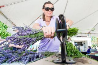 Marcus Larson/News-Register##Shannon Christiansen, volunteer and member of the Oregon Lavender Association, cuts a bundle of lavender for sale at last year's Lavender Festival in Newberg. This year's event runs Saturday and Sunday, July 13-14, at the Chehalem Cultural Center.