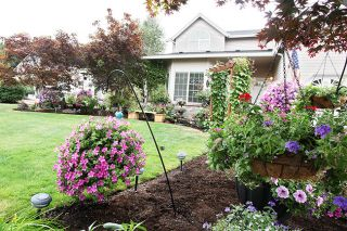 Rockne Roll/News-Register##Baskets of petunias create a tapestry of color in Colleen Carl's award-winning yard.