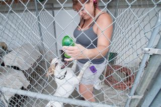 Marcus Larson/News-Register##Homeward Bounds Pets volunteer Michelle Chandler works with Snoopy, one of about a dozen dogs at the no-kill shelter. Dogs get to go for walks and play with toys as they await adoption.