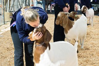 Michaela Fujita-Conrads/News-