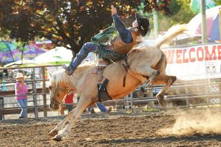Lauren McGinty photo##Cooper Cano of Carlton competes in front of friends and family at a Junior Roughstock World Finals Tour event during the Yamhill County Fair & Rodeo last week. Cano won bareback and saddle competitions in the Novice division, earning points toward the Junior World Finals in Las Vegas in December.