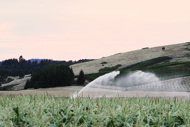 "Rockne Roll / News-Register##Irrigation ""guns"" watering large fields are common sights in western Oregon during the summer. The massive sprinklers can deliver large amounts of water across hundreds of feet."