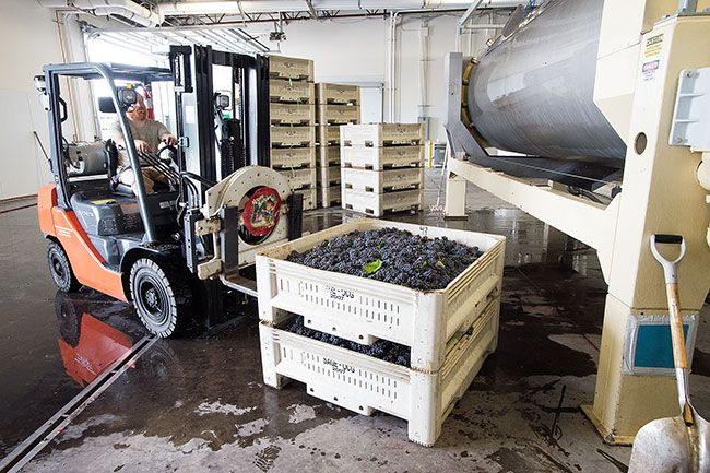 Marcus Larson / News-Register##Dustin Rice with Argyle Winery picks up a pallet of pinot noir grapes to load into the presser machine.