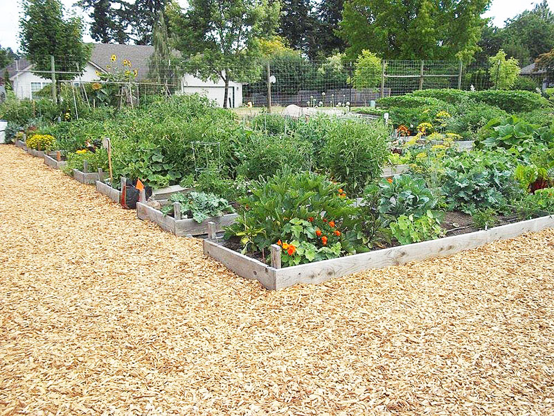 News-Register-file photo##The McMinnville Community Garden.