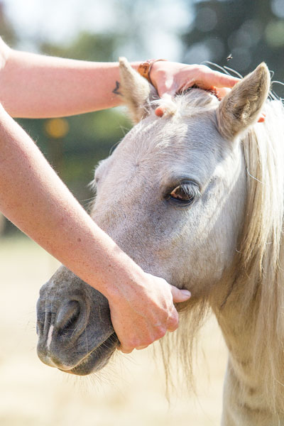 Rockne Roll/News-Register##Whiting gives one of her ponies some much-needed attention.