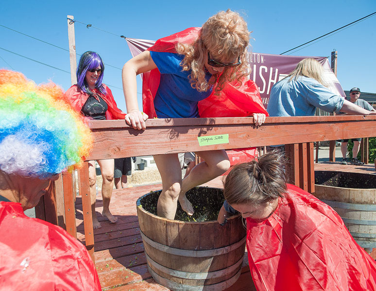 News-Register file photo##The Stomping Sisters team — Ray Aquilera, Kim Quest, Deanne Lang and Corena Bray — compete in last year's grape stomping competition.