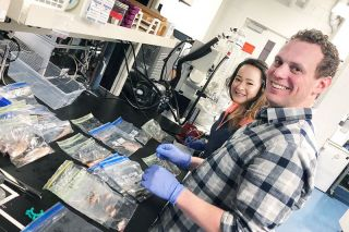 Photo courtesy of OSU's Loesgen Lab ## Researchers Gisela Gonzalez-Montiel and Ross Overacker of Oregon State University process fish and slime swabs collected by marine biologist Misty Paig-Tran of Cal State Fullerton.