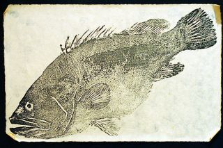 Wikimedia Commons/J.G. Wang##Gyotaku, the traditional Japanese method of printing fish, is now practiced around the world.