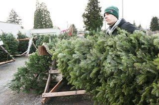 Rockne Roll/News-Register##Kyle Faulk moves a tree at the McMinnville Lions Club's Christmas tree lot in McMinnville on Wednesday. The annual fundraiser moved to the location after five years at Chuck Colvin due to record sales at the auto dealer.