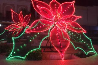 Submitted photo##When Aida Iranzo visited her childhood home in Puerto Rico this fall, she saw many lighted Christmas displays, including large poinsettias.