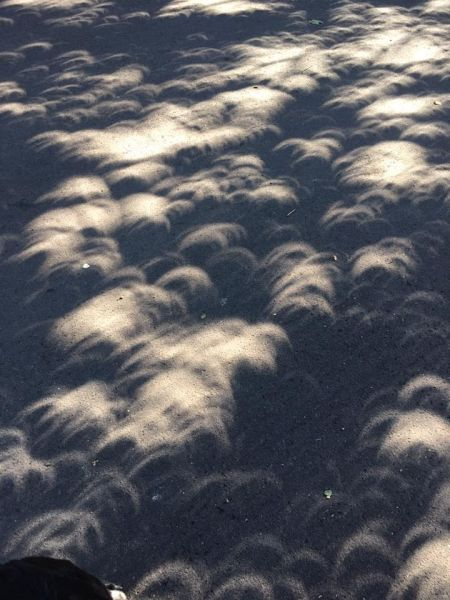 Submitted by Beth Uhrinak#Just post totality, the sun shining through the trees created crescents onto the pavement.