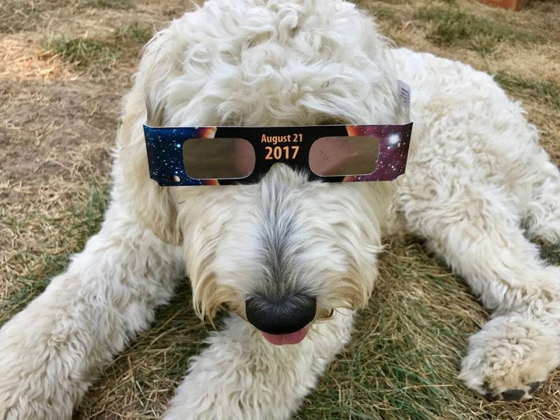 Submitted by Ann-Marie Anderson##Post-eclipse shenanigans, Dayton