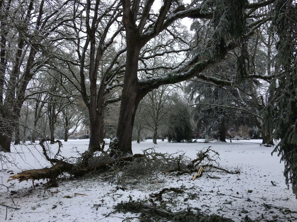 Rusty Rae/News-Register##Fallen branches litter the Linfield University Oak Grove during the ice and snow storm that hit this weekend. Many areas reported power outages as ice coated everything.