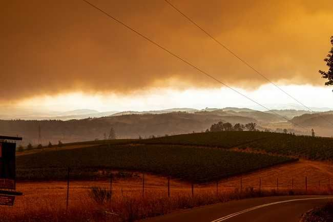 Rusty Rae/News-Register##A vineyard, looking northwest on Worden Hill Road.
